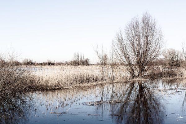 Foto aan de muur Landscape 2   Brandwijk Fotografie